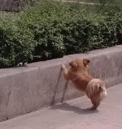 一条小狗了